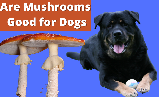 Are Mushrooms Good for Dogs