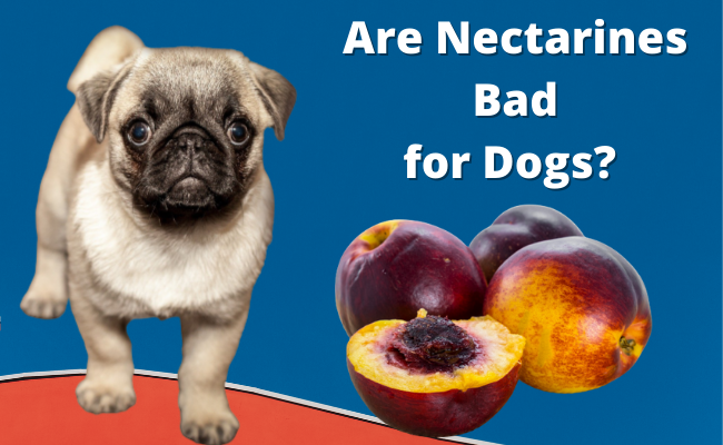 Are Nectarines Bad for Dogs