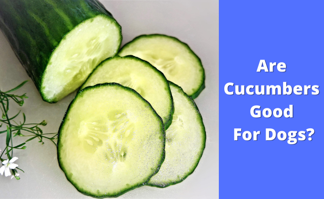 Are cucumbers good for dogs