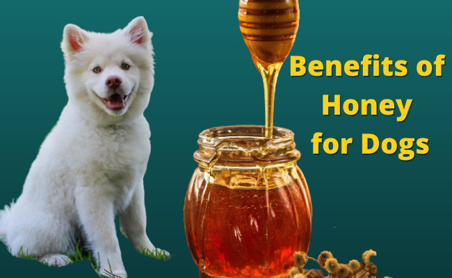 Health Benefits of Honey for Dogs