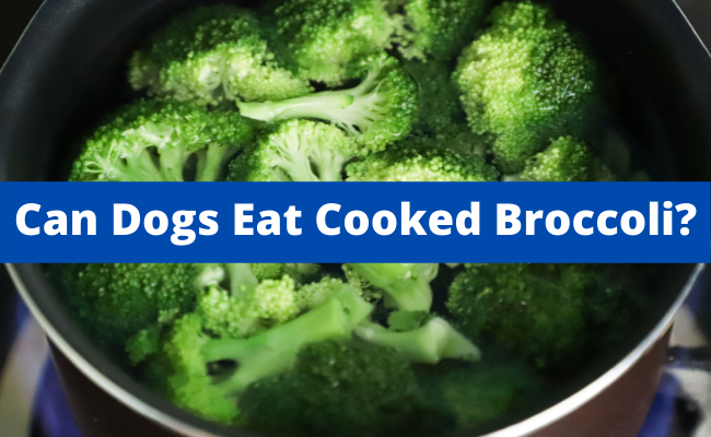 Can Dogs Eat Cooked Broccoli