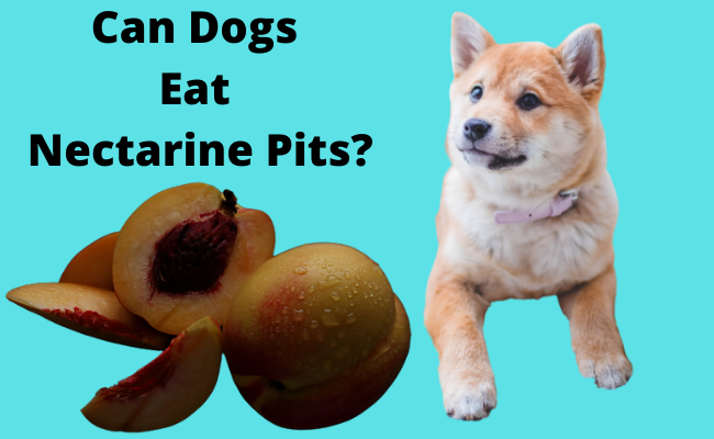 Can Dogs Eat Nectarine Pits