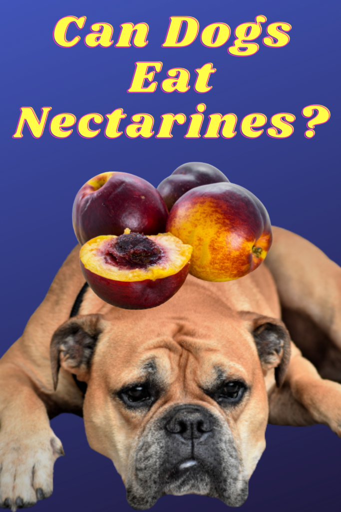 Can Dogs Eat Nectarines   Can Dogs Have Nectarines