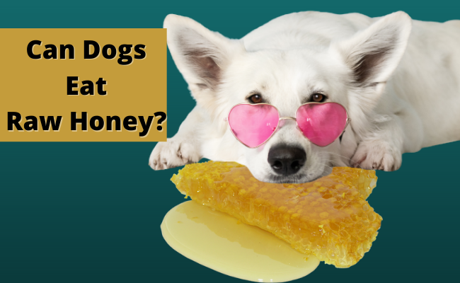 Can Dogs Eat Raw Honey