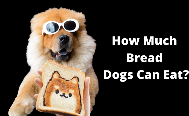 How Much Bread Dogs Can Eat