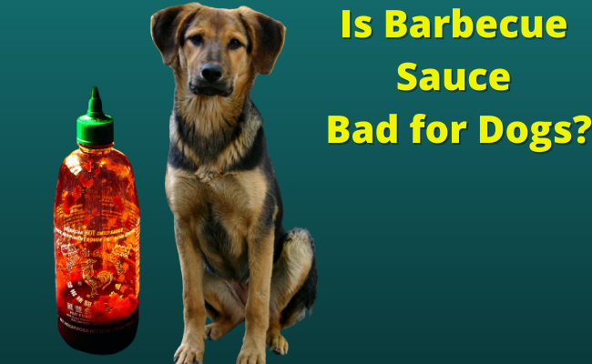 Is Barbecue Sauce Bad for Dogs