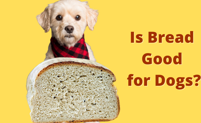 Is Bread Good For Dogs