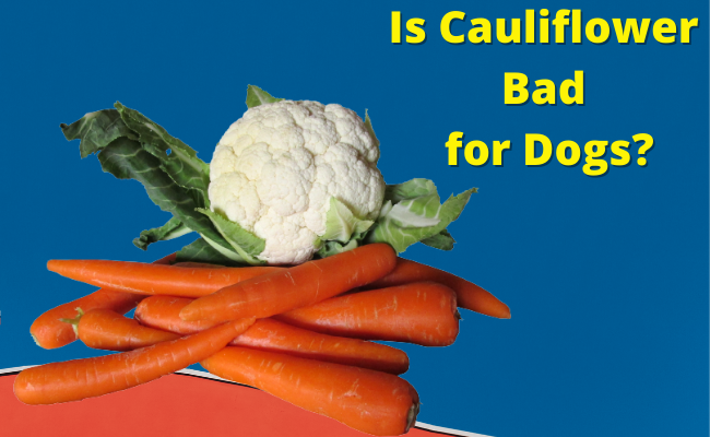 Is Cauliflower Bad for Dogs