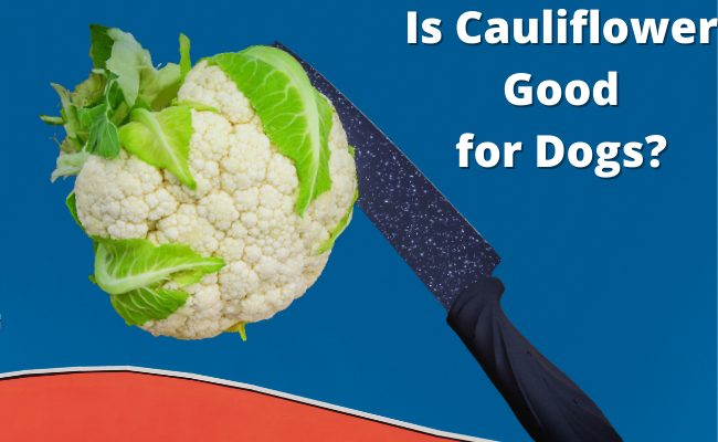 Is Cauliflower Good for Dogs