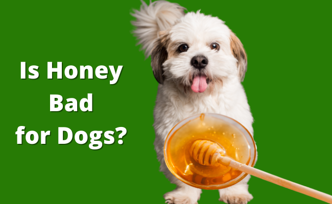 Is Honey Bad for Dogs