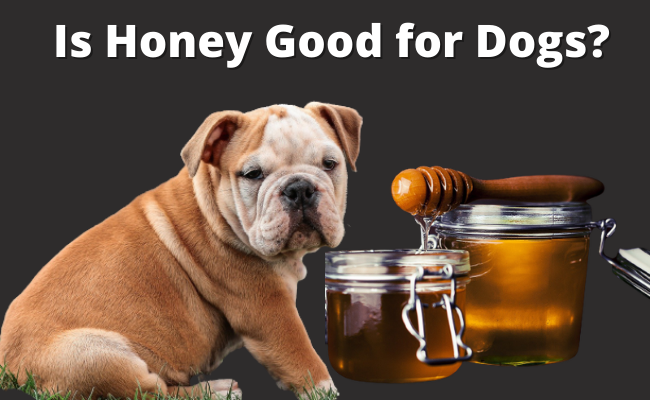 Is Honey Good for Dogs
