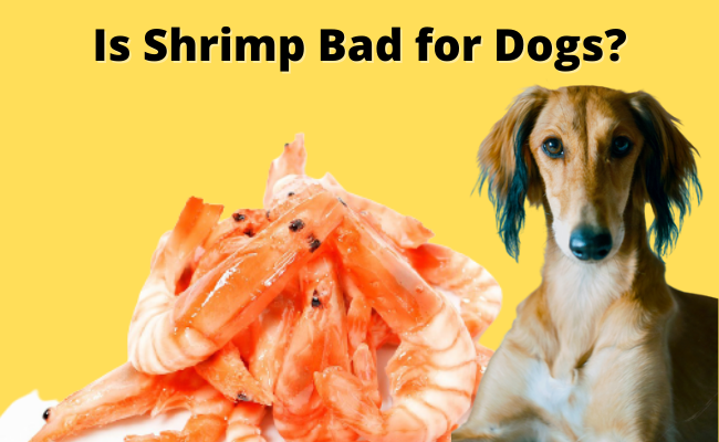 Is Shrimp Bad for Dogs