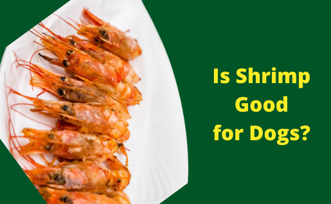 Is Shrimp good for dogs
