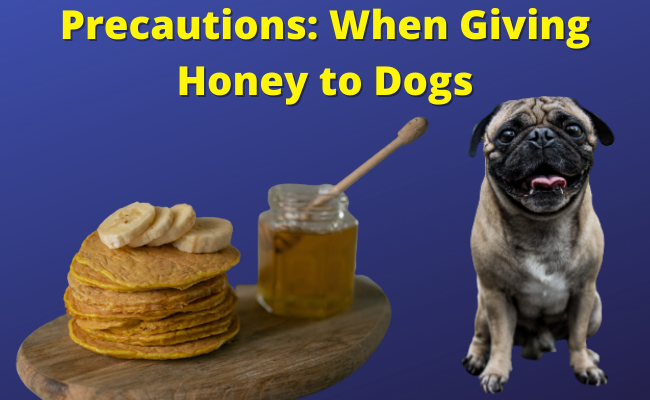 Precautions When Giving Honey to Dogs