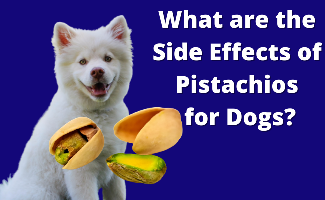 What are the Side Effects of Pistachios for Dogs