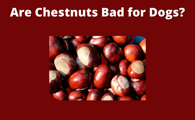 Are Chestnuts Bad for Dogs