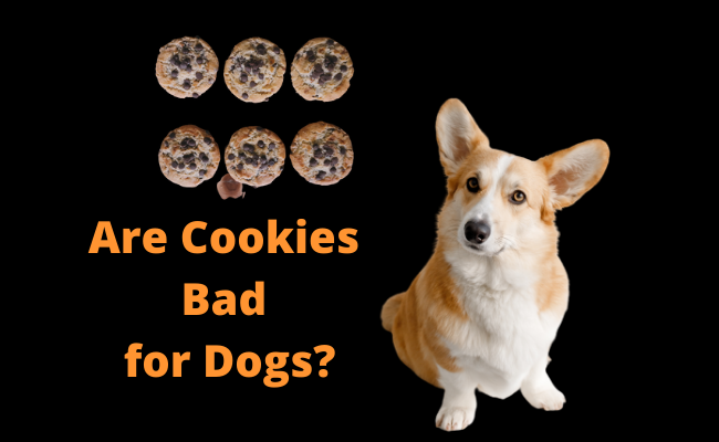 Are Cookies Bad for Dogs