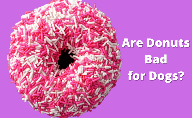 Are Donuts Bad for Dogs