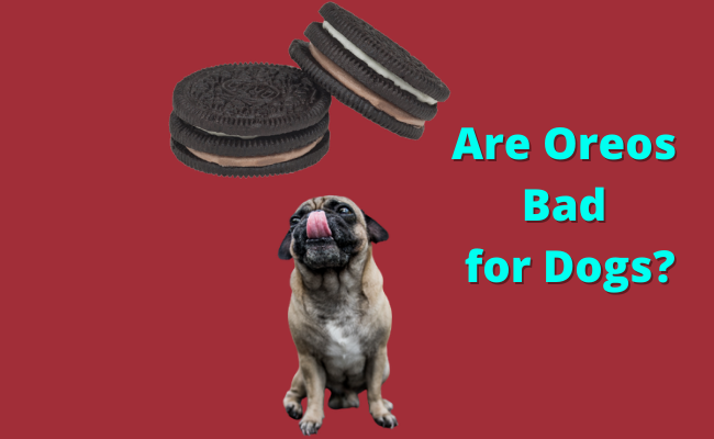 Are Oreos Bad for Dogs