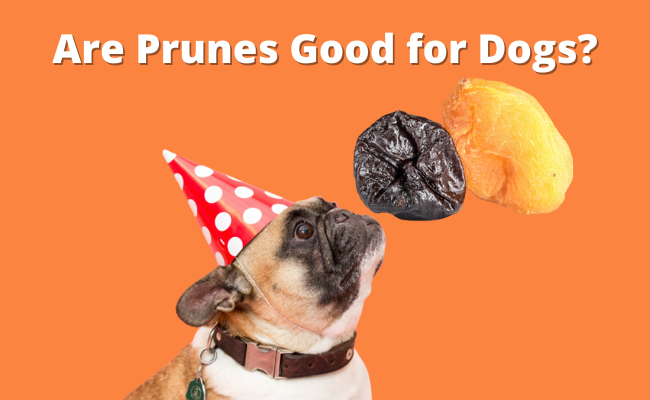 Are Prunes Good for Dogs