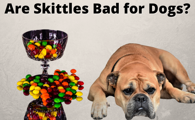 Are Skittles Bad for Dogs