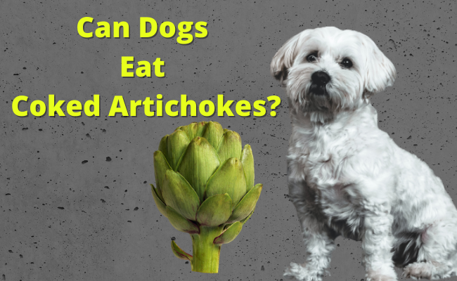Can Dogs Eat Coked Artichokes