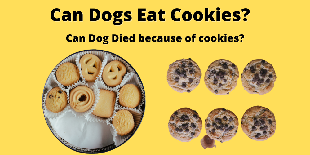 Can Dogs Eat Cookies