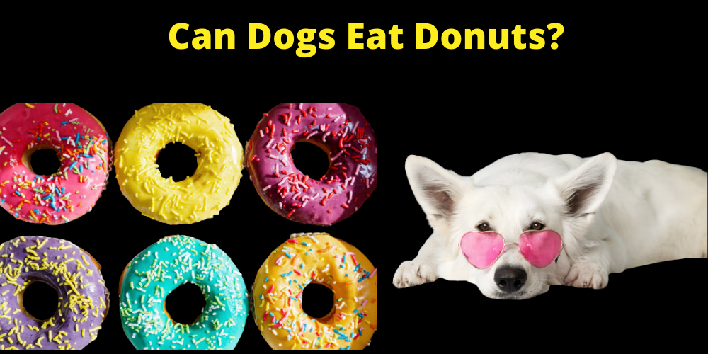 Can Dogs Eat Donuts