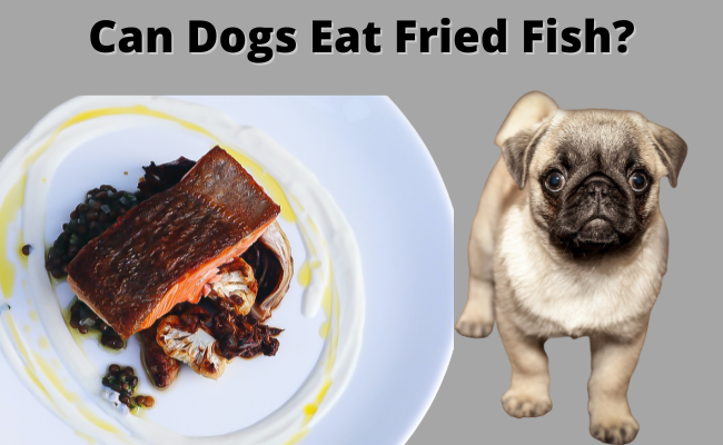 Can Dogs Eat Fried Fish