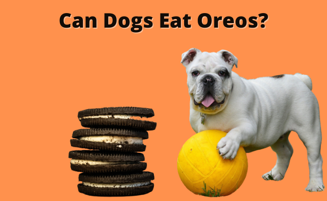 Can Dogs Eat Oreos   Can Dogs Have Oreos