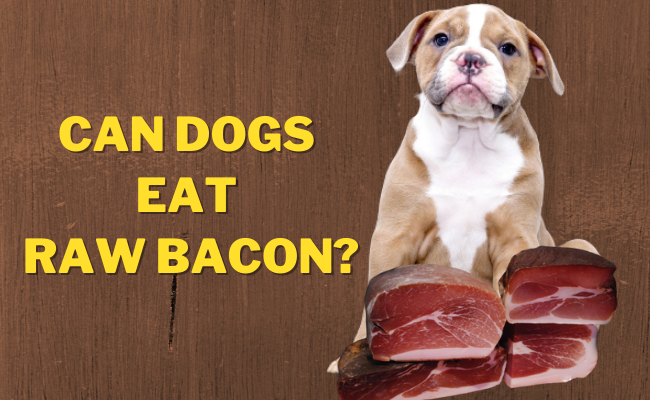 Can Dogs Eat Raw Bacon | Can dogs have raw bacon