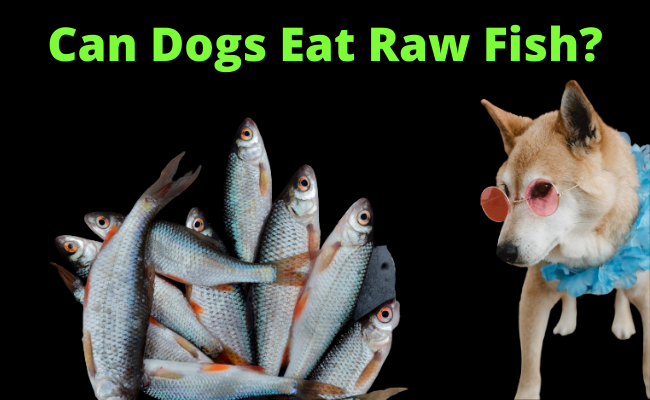 Can Dogs Eat Raw Fish