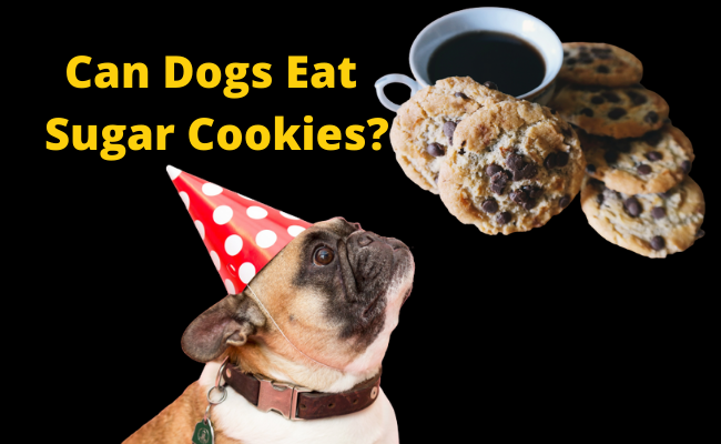 Can Dogs Eat Sugar Cookies