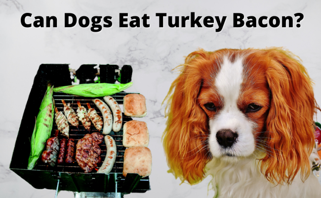 Can Dogs Eat Turkey Bacon
