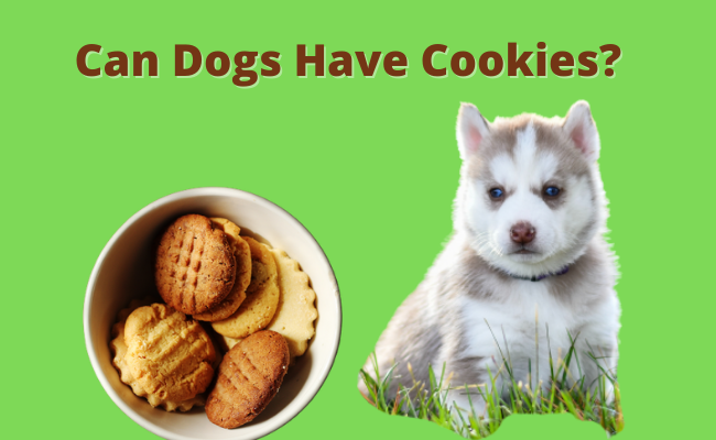 Can Dogs Have Cookies