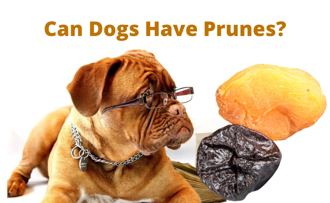 Can Dogs Have Prunes