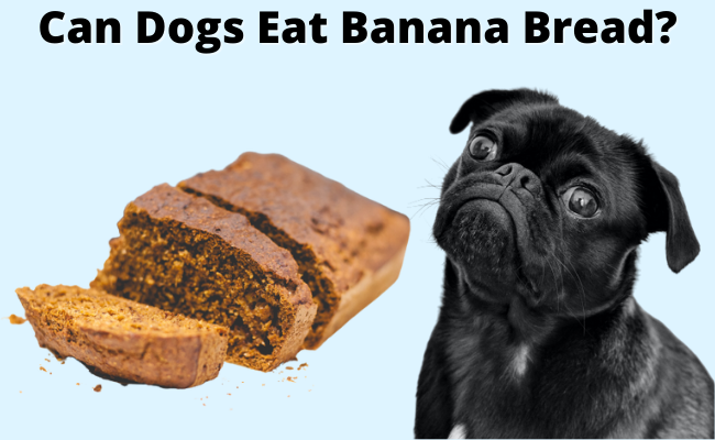Can Dogs Eat Banana bread | Can Dogs Have Banana Bread