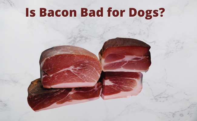 Is Bacon Bad for Dogs