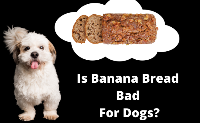 Is Banana Bread Bad For Dogs