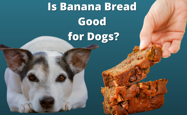 Is Banana Bread Good for Dogs