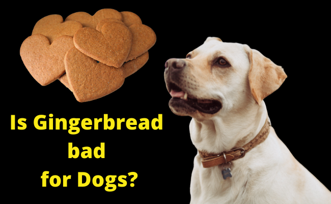 Is Gingerbread bad for Dogs