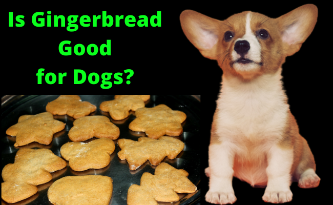 Is Gingerbread good for Dogs