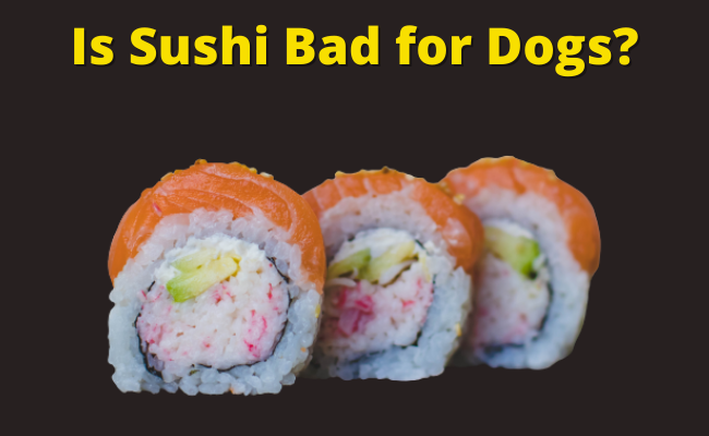 Is Sushi Bad for Dogs