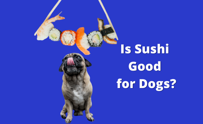 Is Sushi Good for Dogs