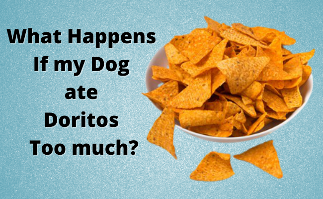 What Happens If my Dog ate Doritos Too much