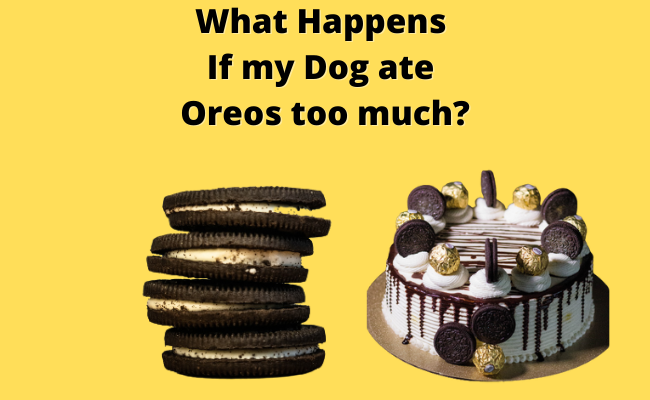 What Happens If my Dog ate Oreos too much