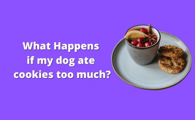 What Happens if my dog ate cookies too much