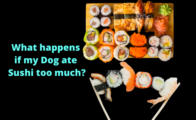 What happens if my Dog ate Sushi too much