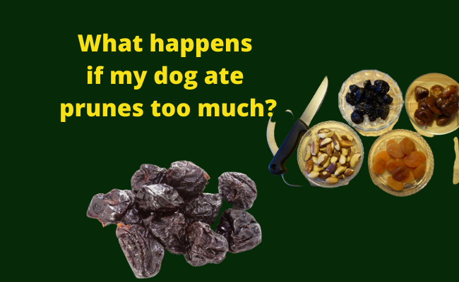 What happens if my dog ate prunes too much