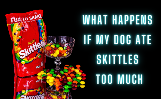 What happens if my dog ate skittles too much